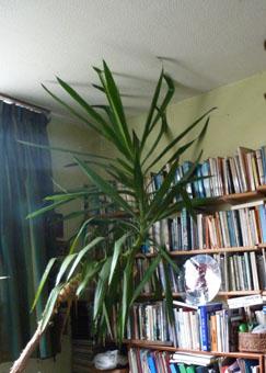 elizabeth's book loving plant